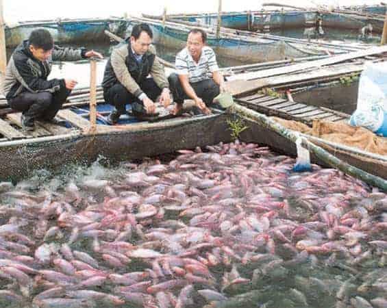 Thức ăn cho Cá